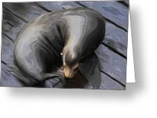 Lone Sea Lion Greeting Card by Jack Zulli