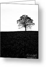 Lone Tree Black And White Silhouette Greeting Card