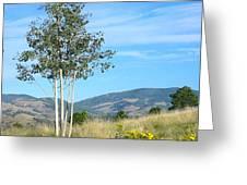 Lone Tree Colorado Greeting Card