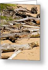 Lonely Driftwood Greeting Card