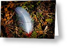 Lonely Feather Greeting Card