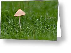 Lonely Mushroom Greeting Card by Miguel Capelo