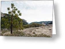 Lonely Pine Greeting Card