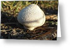 Lonely Shroom Greeting Card
