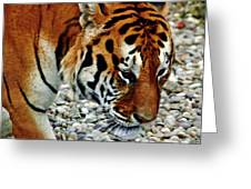 Lonely Tiger Greeting Card