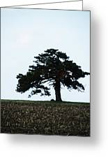 Lonely Tree #1 Greeting Card