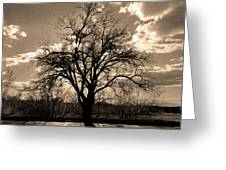 Lonely Tree At Sunset Greeting Card