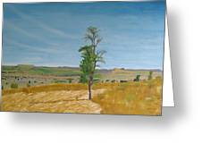 Lonely Tree In Africa Greeting Card