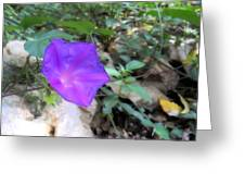 Lonely Violet Greeting Card