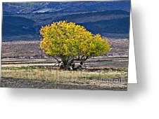 Lonesome Greeting Card