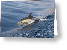 Long-beaked Common Dolphin Delphinus Greeting Card
