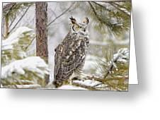 Long Eared Owl Greeting Card