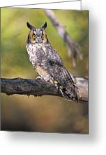 Long Eared Owl On Branch Greeting Card
