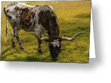 Long Horn Mid Fall Greeting Card