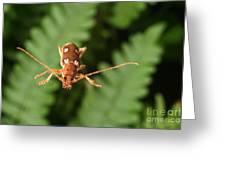 Long-horned Beetle In Flight Greeting Card