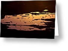 Long Reef Golden Pond Greeting Card