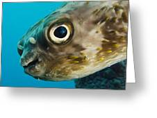 Long-spine Porcupinefish Diodon Greeting Card