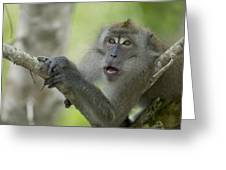 Long-tailed Macaque Macaca Fascicularis Greeting Card