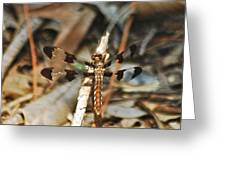 Long Tailed Skimmer 8695 3318 Greeting Card