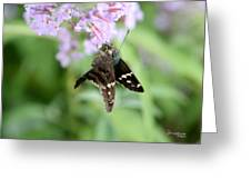 Long Tailed Skipper - Urbanus Proteus Greeting Card