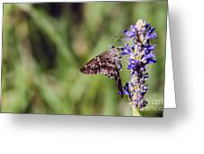 Long-tailed Skipper Butterfly Greeting Card
