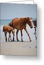 Long Walks On The Beach Greeting Card