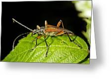 Longhorn Beetle Greeting Card