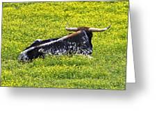 Longhorn Bull Greeting Card
