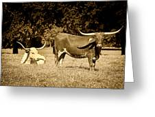 Longhorn Cows Rsting In Monochrome Greeting Card