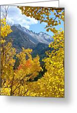 Long's Peak And The Keyboard Of The Winds Amidst Aspen Gold Greeting Card by Margaret Bobb