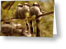 Longtailed Tit Fledglings Greeting Card