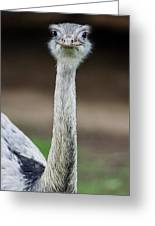 Looking At You Greeting Card
