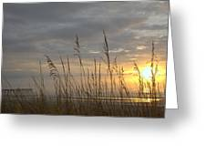 Looking Back Greeting Card by Lynn Davenport