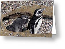 Looking Out For You - Penguins Greeting Card