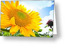 Looking Up Greeting Card