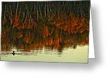 Loon In Opeongo Lake With Reflection Greeting Card