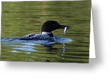 Loon With Minnow Greeting Card