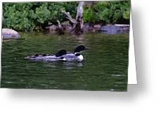 Loons With Twins 2 Greeting Card