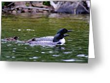 Loons With Twins 3 Greeting Card