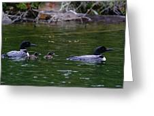 Loons With Twins Greeting Card