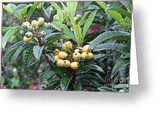 Loquats In The Rain Greeting Card
