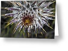 Lost Coast Thistle Greeting Card