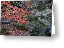 Lost Maples Fall Afternoon Greeting Card