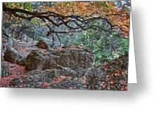 Lost Maples Hiking Trail Greeting Card