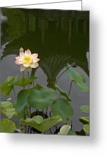 Lotus 2 Greeting Card
