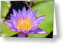 Lotus Aglow Greeting Card