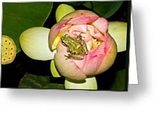 Lotus And Frog Greeting Card