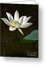 Lotus Beauty Greeting Card