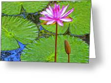 Lotus Blossom And Water Lily Pads Greeting Card