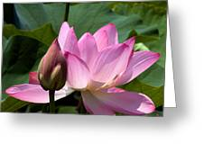 Lotus Bud--here Is How You Do It Dl065 Greeting Card